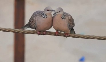 Most Romantic Birds in the world Caught In Camera