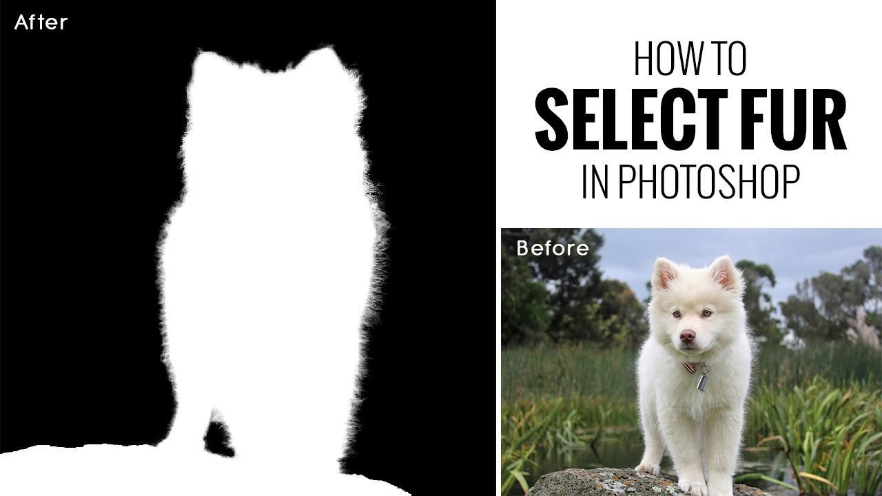 How to Select Fur Hair Easily in Photoshop