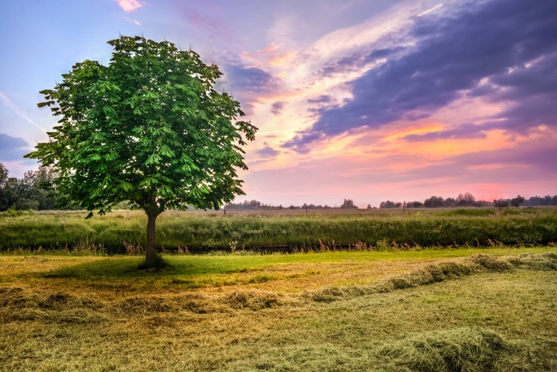 how to edit landscape photo using camera raw in photoshop psdesire
